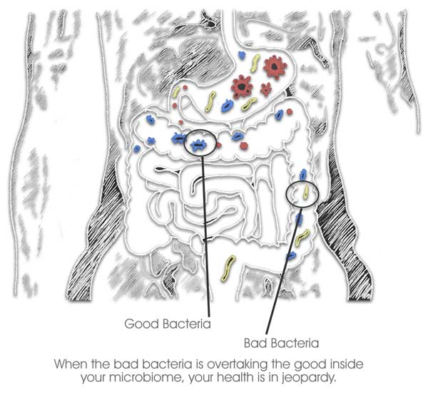 Health, Wellness & Happiness Lives In The Gut microbiome